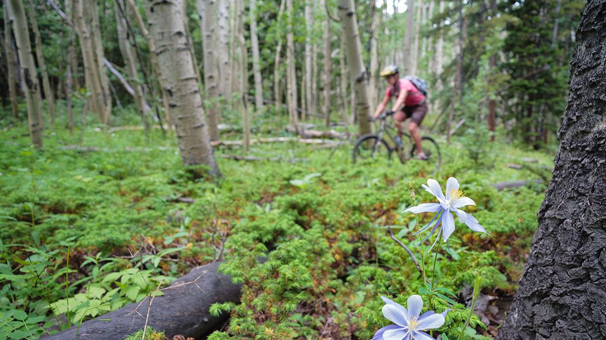 Mountain Biking Buena Vista & Salida