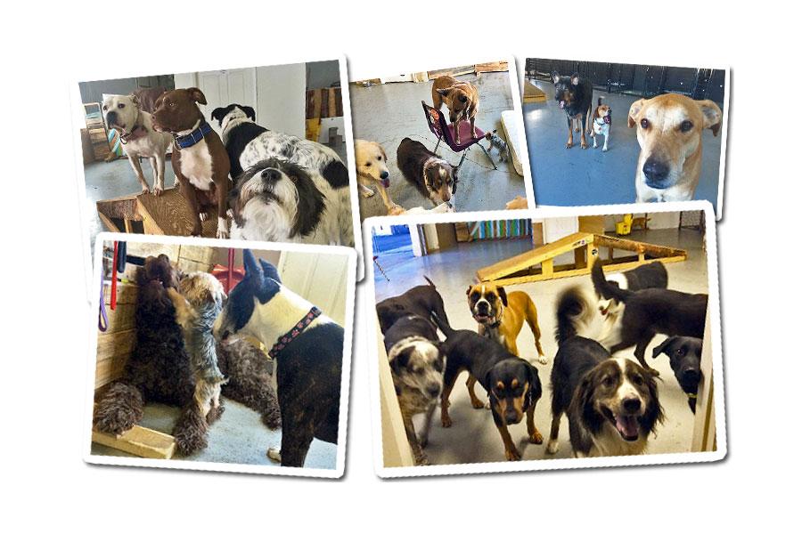 Alpha Dog Care