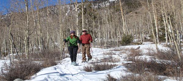 Proposal-snowshoe